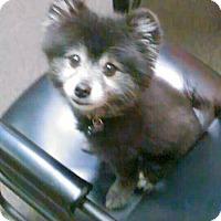 Adopt A Pet :: Luna - Tavares, FL