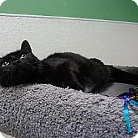 Adopt A Pet :: Odessa - $25 Adoption Fee - Pekin, IL