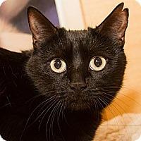 Adopt A Pet :: Stormy - Irvine, CA