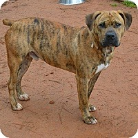 Adopt A Pet :: Diamond - Athens, GA