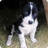 Adopt A Pet :: Jinx - Waller, TX