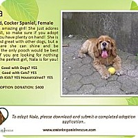 Adopt A Pet :: Nala - Ottawa, ON