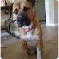 Adopt A Pet :: Raja - Only $55 adoption fee! - Litchfield Park, AZ