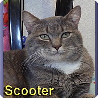 Adopt A Pet :: Scooter - Aldie, VA