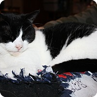 Adopt A Pet :: Trinity - Orillia, ON
