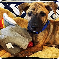 Adopt A Pet :: Bravo - Johnson City, TX