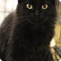 Adopt A Pet :: Lovey - Sacramento, CA