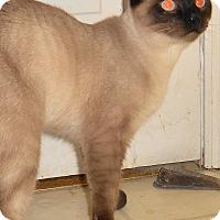 Adopt A Pet :: Pharaoh - Chattanooga, TN