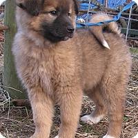 Adopt A Pet :: Margo - Hartford, CT