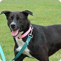 Labrador Retriever Mix Dog for adoption in Cleveland, Texas - jasmine