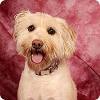 Adopt A Pet :: Wendy Wheaton - St. Louis, MO