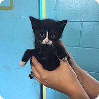 Adopt A Pet :: Jordie - Bishopville, SC
