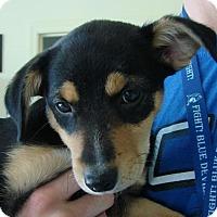Adopt A Pet :: Sasha - Erwin, TN