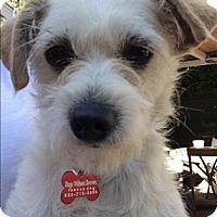 Adopt A Pet :: Koda - Encino, CA
