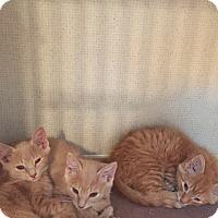 Adopt A Pet :: SLY aka SYLVESTER - Hamilton, NJ