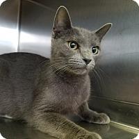 Adopt A Pet :: Bonnie - Elyria, OH