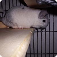 Adopt A Pet :: Ling - Avondale, LA