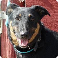 Adopt A Pet :: Wally - Vacaville, CA