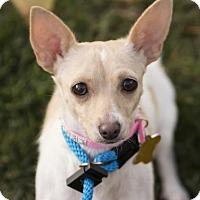 Adopt A Pet :: Taffeta - Salt Lake City, UT
