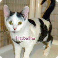 Adopt A Pet :: Maybelline - York, PA