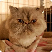 Adopt A Pet :: Aspen - Sawyer, ND