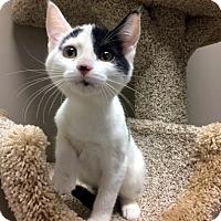 Adopt A Pet :: Olive - Creston, BC
