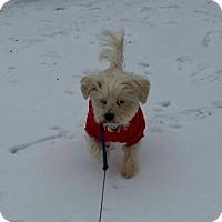 Adopt A Pet :: Jasper - Slanesville, WV