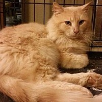 Adopt A Pet :: Jinx ADULT MALE - Morehead, KY