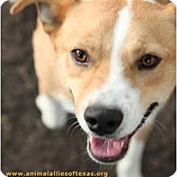 Adopt A Pet :: Daddy Jack - Garland, TX
