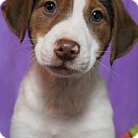 Adopt A Pet :: Magnolia - Wytheville, VA