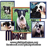 Adopt A Pet :: Midnight - Colleyville, TX