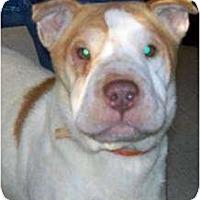 Adopt A Pet :: Margo - Newport, VT