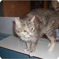 Adopt A Pet :: Pee Wee - Hamburg, NY