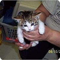 Adopt A Pet :: Liz - Island Park, NY