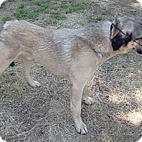 Adopt A Pet :: Beau - Moulton, AL