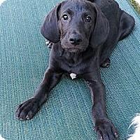 Adopt A Pet :: Jiminy Cricket - Russellville, KY