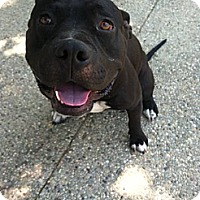 Adopt A Pet :: BUDDY (Courtesy Post) - LOS ANGELES, CA