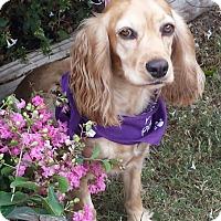 Adopt A Pet :: Alexis - Sugarland, TX