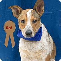 Adopt A Pet :: Red - Hillsboro, TX