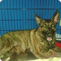 Adopt A Pet :: one female left - Northumberland, ON