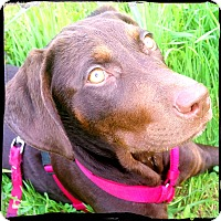 Adopt A Pet :: Lucy - Johnson City, TX