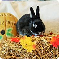Adopt A Pet :: Felix - Hillside, NJ