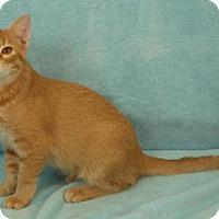Adopt A Pet :: Phoenix - Elkhorn, WI