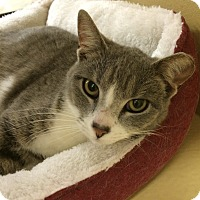 Adopt A Pet :: Cissy - Monroe, GA