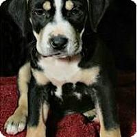 Adopt A Pet :: Jim Bob - Lufkin, TX