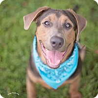Adopt A Pet :: Carter - Kingwood, TX