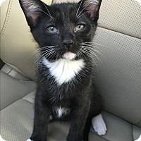 Adopt A Pet :: Peppercorn (ETAA) - Harrisonburg, VA