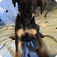 Adopt A Pet :: Cadillac - Los Angeles, CA