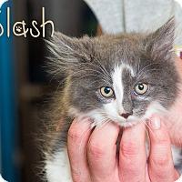 Adopt A Pet :: Slash - Somerset, PA