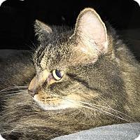 Adopt A Pet :: PK - Adoption Pending - Garden City, MI